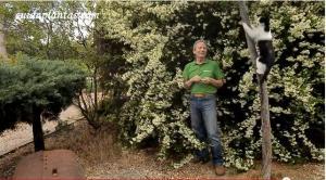 Arbustos en el Jardin de Pepe Plana