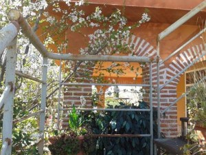 En el Jardín de Pepe Plana2