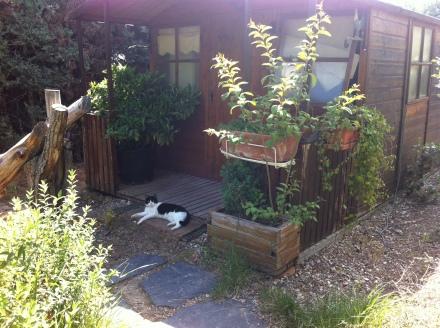 La gatita Fidias ante su casa con aucuba en el porche.