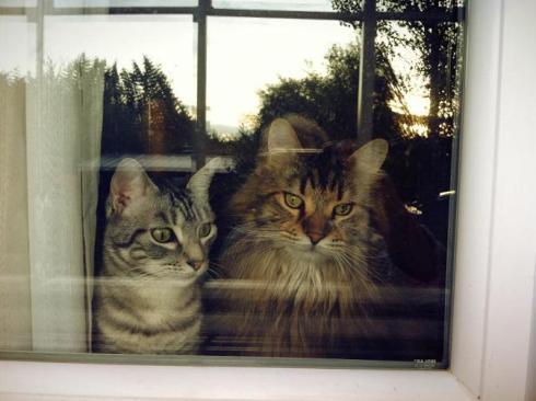 Gato y George 1
