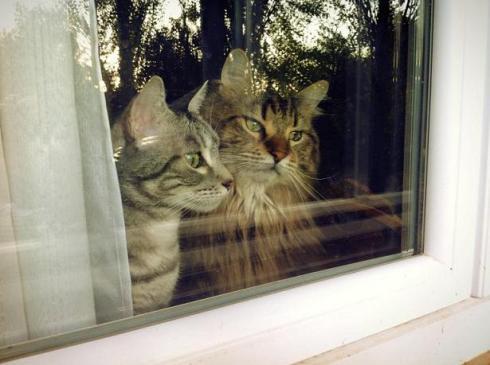 Gato y George2