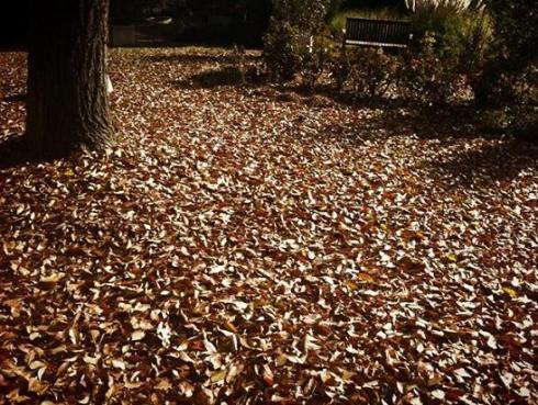 Las hojas en el Jardín de Pepe plana