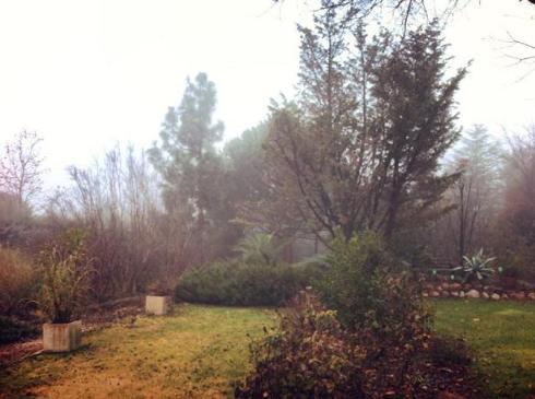 Niebla en el jardin de Pepe Plana2
